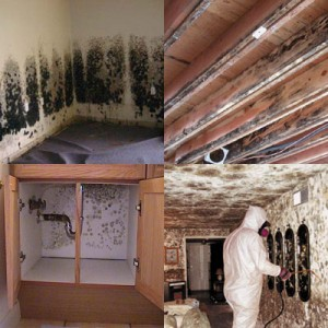 House Mold Mildew Cleanup